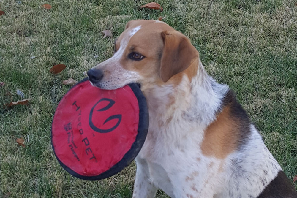Tucker the Dog with Disc in Mouth